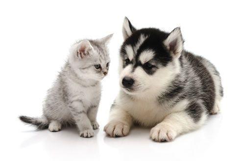 Yiddish eurotalk blog - Les chiens ne font pas des chats ...